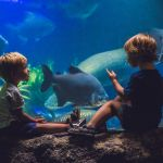 Two boys look at the fish in the aquarium